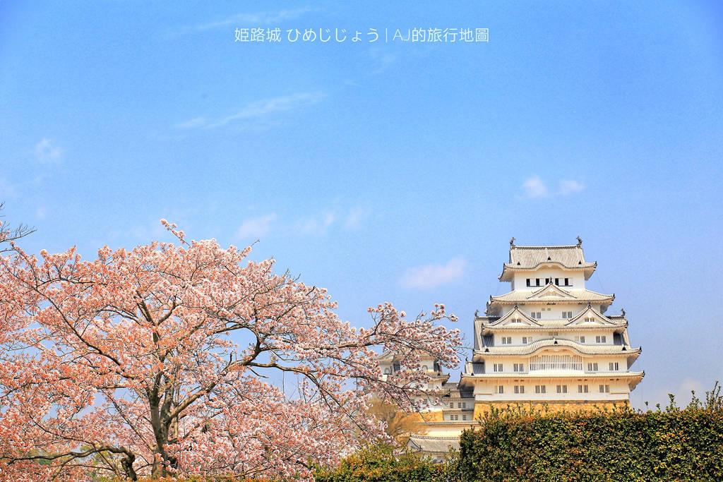 姬路城看櫻花 日本櫻名所100選 日本三大名城 交通、門票、開放時間分享