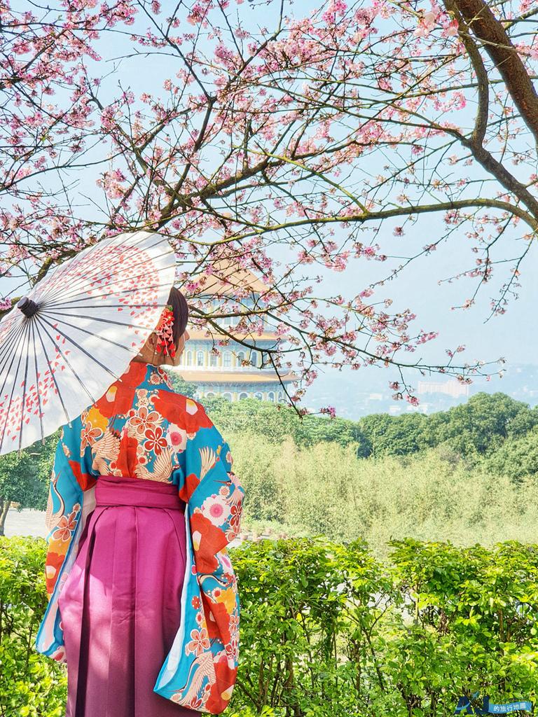 淡水天元宮櫻花季 寒櫻、三色櫻每年1~2月開花 吉野櫻每年3~4月開花 停車場、公車、交通分享